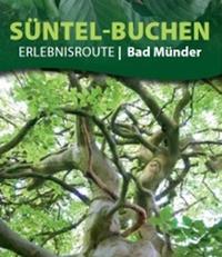 Bild Süntel-Buchen